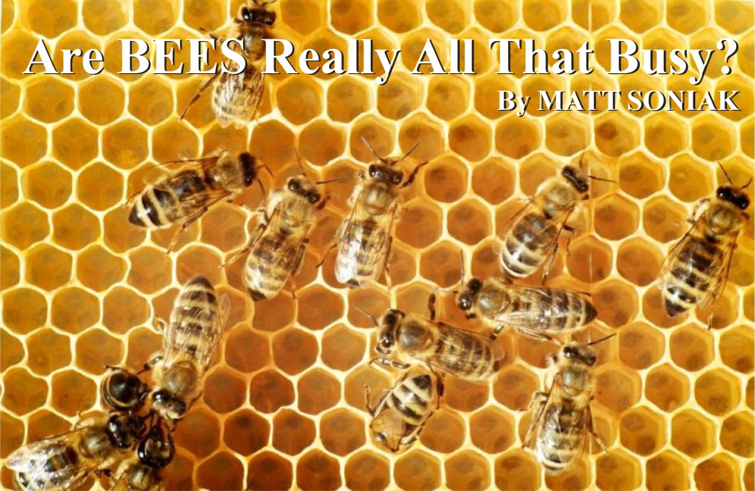 save the bees – Honeycut